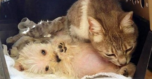 Despite Being Attacked By a Dog, This Cat Gives Love To Abandoned Puppy Who Needs A Mom