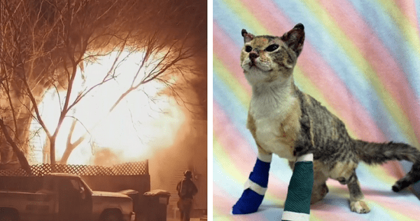 Stray Kitten Trapped In A Burning House Runs Straight To Her Rescuer