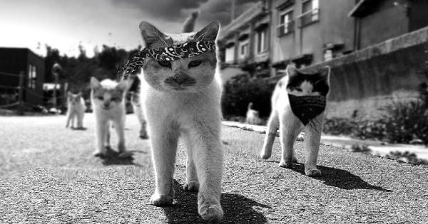 Cat Gang Walking Down Street Gets Humorous Photoshop Treatment!