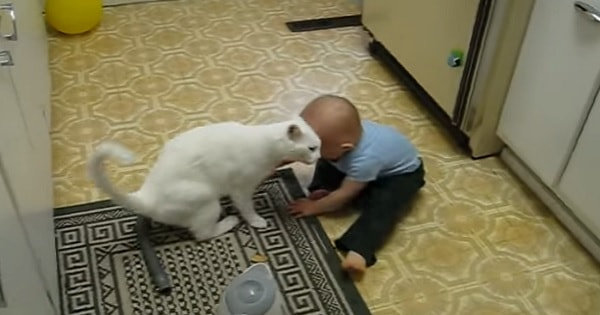 Deaf Kitty Absolutely LOVES His Baby Brother