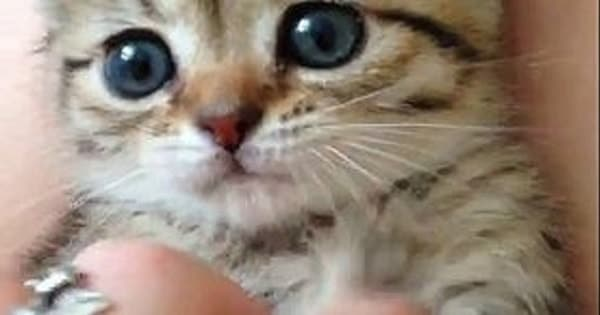 Cute Little Kitten is Guaranteed to Brighten Your Day