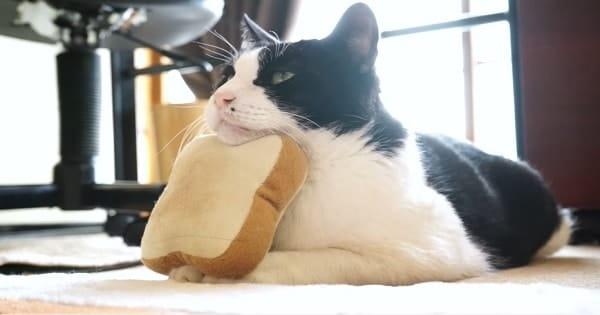 This Is Ohagi – The Fun Loving Kitty
