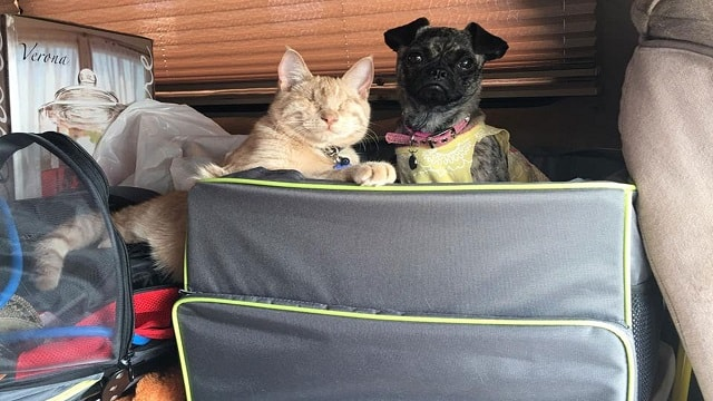 Disabled Pup and Blind Cat Form Precious …
