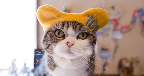 Happy Birthday To Maru The Cat