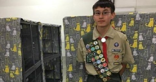 Boy Scout Greatly Helps Kittens At Shelter By …