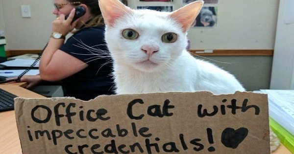 After Waiting More Than 400 Days To Be Adopted, This Gorgeous Cat Became ...