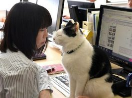 Company Decides To Bring In Cats To Counter Employee Stress