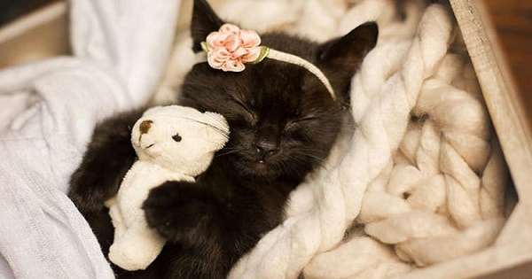 Photographer Does Kitten Photo Shoot Of Her Daughter's Kitten And It's The Cutest Thing Ever