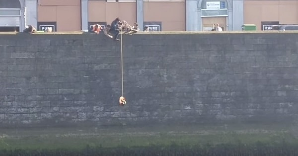 Cat in Ireland Rescued From River – The Amazing Reaction From Onlookers Is Priceless