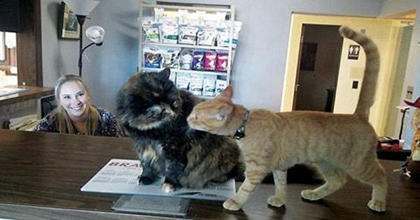 Pushy Ginger Cat Named Elsa Completely Takes Over Veterinary ...