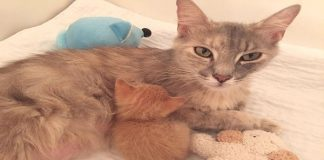 Grieving Mama Cat Gets The Best Mother's Day ...