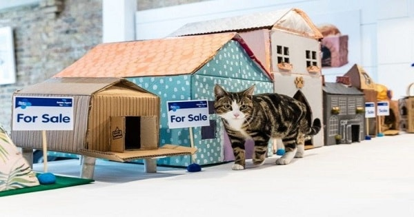 Blue Cross Launches The World's First Ever Estate Agent Selling Properties For Cats