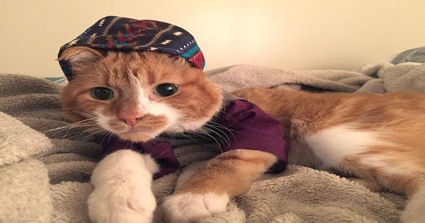 Fashion Designer Creates Clothes for Her Cat And It Helps To Protect Him From …