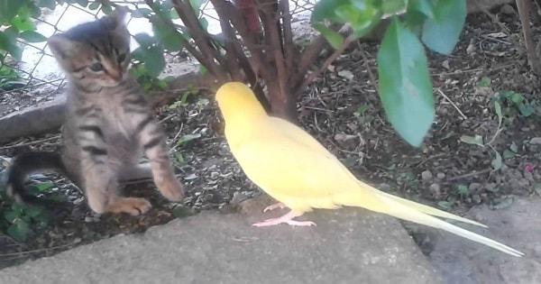 Parrot Tries To Befriend Cautious Kitten