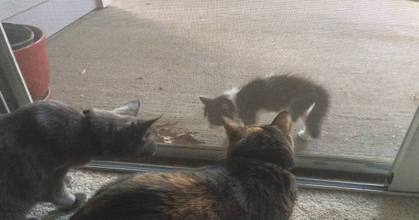 Stray Kitten Shows Up At Door And Literally Demands To Be ...