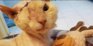 Cat Who Survived Terrible Acid Attack Finds Comfort In A ...