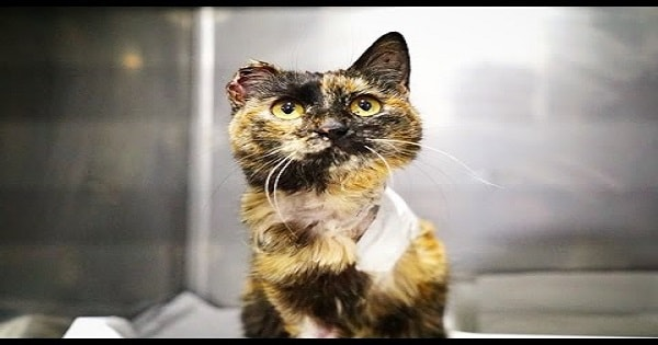 Miracle Cat Survives Horrific Injuries And Becomes Viral Sensation