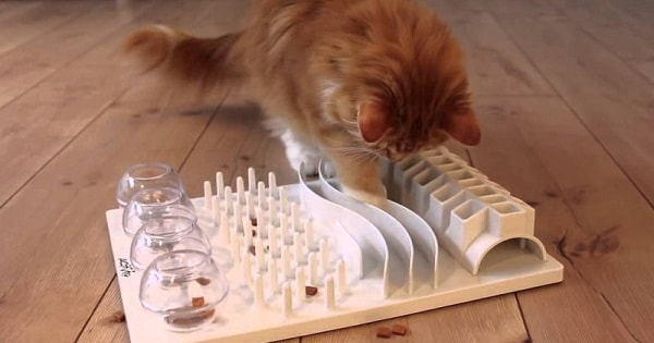 Cats Who Have To Work For Their Food – Does It Make Them Happier and Healthier?