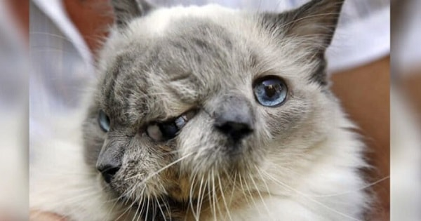 Two Faced Kitty Named Frank And Louie Set A World Record, But Then Sadly …