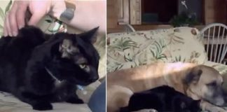 The Family Dog Finds Missing Cat Months After Devastating ...