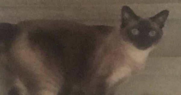 Hero Pet Cat Alerts North Carolina Family About Carbon …