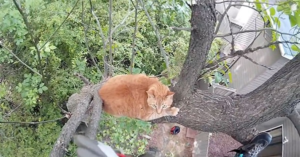 15-Year-Old Cat Stuck in Tree for 3 Days Grateful for His …