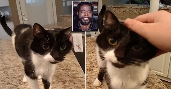 The Internet Simply Can't Get Enough Of Cat Who Meows And Sounds Like Barry White
