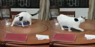 Cat Encounters A Lazy Susan - But Can't Figure Out To Get Off