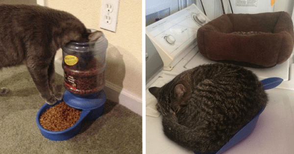 These Ungrateful Cats Have No Use For Expensive Things And They're Not Afraid To Show It