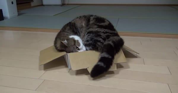 The Amazing Maru the Cat