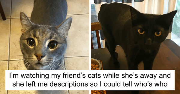 Cat-Sitter Shares A Note She Got From The Owner, And It's Hilarious