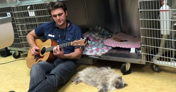 Cat Gets Surgery And To Soothe It, This Vet Does The Sweetest Thing ...