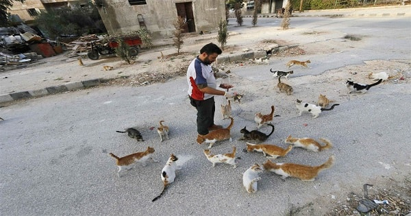 Syria's 'Cat Man of Aleppo' Forced to Completely Start Over — From Scratch!