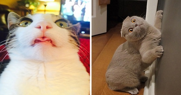 21 Photos Proving That Yes, Cats Truly Are Cute, But They're Also Big Weirdos