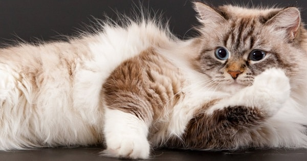 The 7 Things You May Not Realize About Your Cat