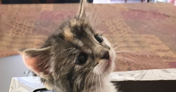 Cute Kitten Goes Missing And Then Is Discovered – You'll Never Guess Where!