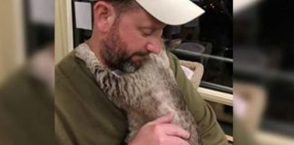 This Shy Cat Was Afraid Of Everyone And Always Hid Herself - Until ...