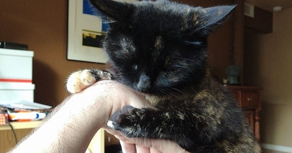 Man Rescued a Stray Cat 5 Years Ago And She Hasn't Stopped Cuddles His Arm