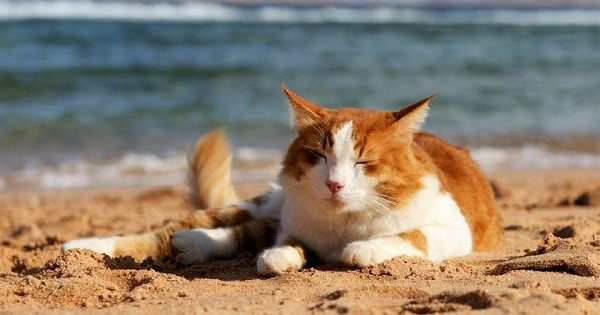 5 Top Ways To Keep Your Cat Cool This Summer