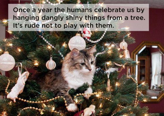 The 19 Deep Philosophical Thoughts Our Cats Have 1