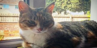 Cat's Human Sends Hilarious Apology Note To Neighbors After Cat Steals Their ..