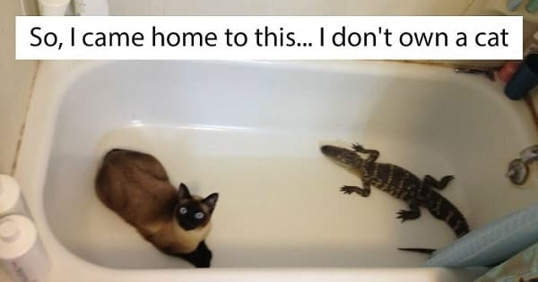 "10+ Of The Best And Funniest ""I Don't Own A Cat"" Moments"