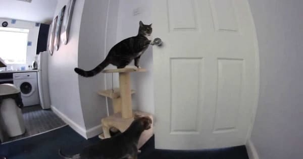 Extremely Clever Cat Helps the Dog Escape …
