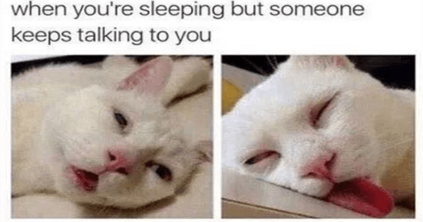 34 Hilarious Memes You Will Only Understand If Your Cat Is In Charge