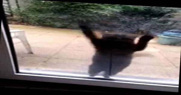 Hey Human! Let Me In! When It Comes To Window Washing, This Cat's Got Some Skills!