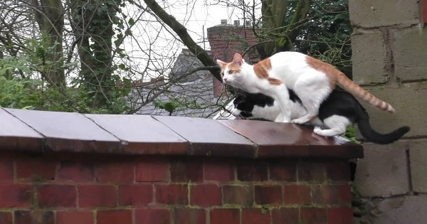 Cats Jump At The Very Same Time, Landing Right On Top of …