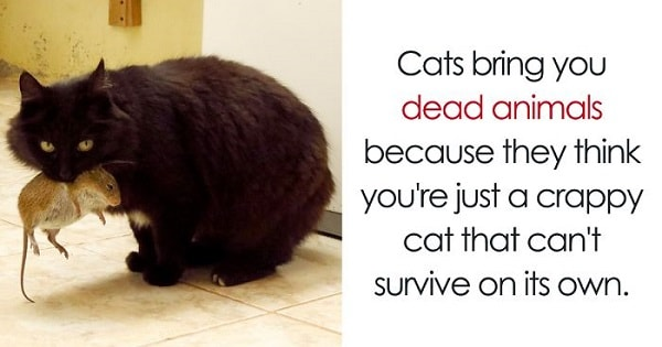 10+ Amazing Cat Facts That You Probably Never Knew