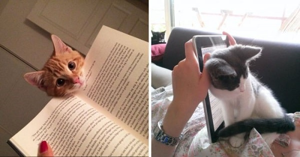 14 Cats Who Are Totally Desperate For Attention, And Will Do Anything To Get It