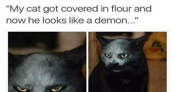 32 Cats Who Have Totally And Completely Outdone Themselves