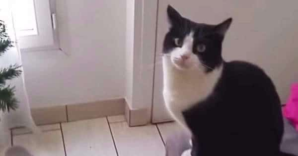 Completely Adorable Tuxedo Cat Just Wants To Go Outside ….